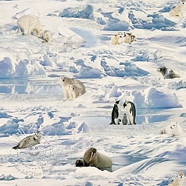 Decoration fabric Antarctica digital print