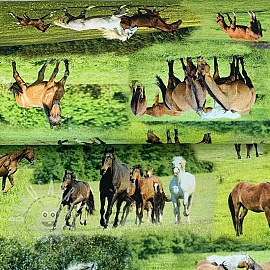 Decoration fabric Horses in Meadow digital print